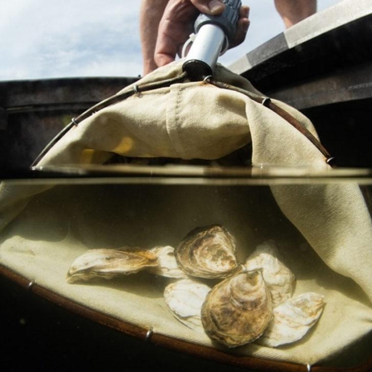oyster bins